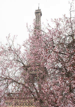 First Signs of Spring on the Champs de Mars