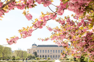 Jardin des Plantes Blossoms in the Spring - Every Day Paris