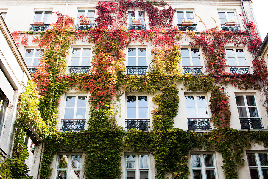 Autumn Ivy in Paris - Every Day Paris