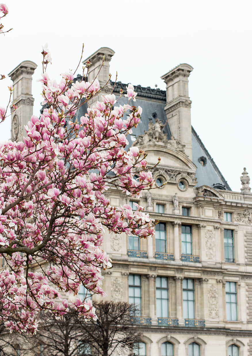 Tuileries Gardens in Bloom with Magnolias - Every Day Paris