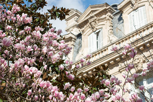 Parc Monceau Spring Magnolia Blossoms - Every Day Paris