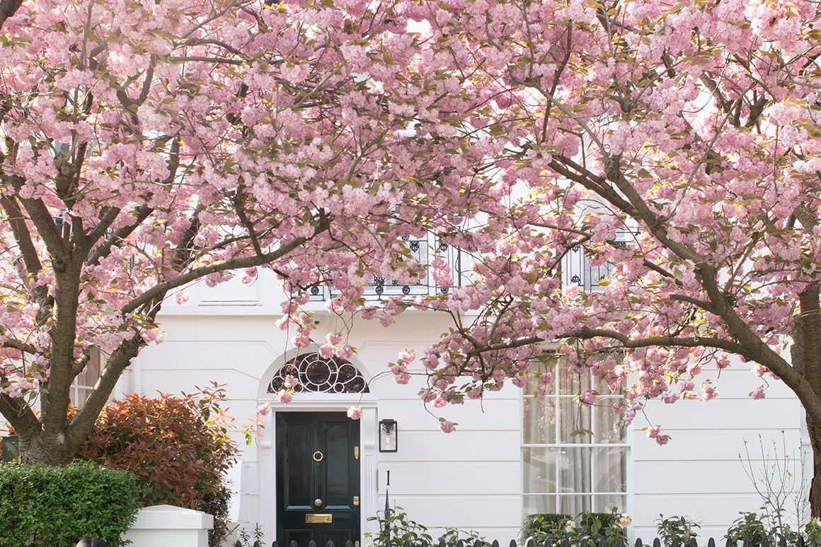 Blossom Season in London - Every Day Paris
