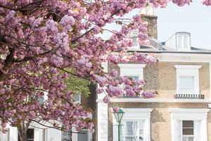 London in Bloom April - Every Day Paris