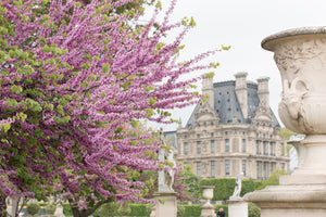Spring Morning Paris in The Tuileries - Every Day Paris