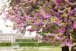 Spring Walk in The Tuileries - Every Day Paris