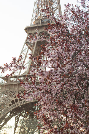 Spring Blooms at the Eiffel Tower
