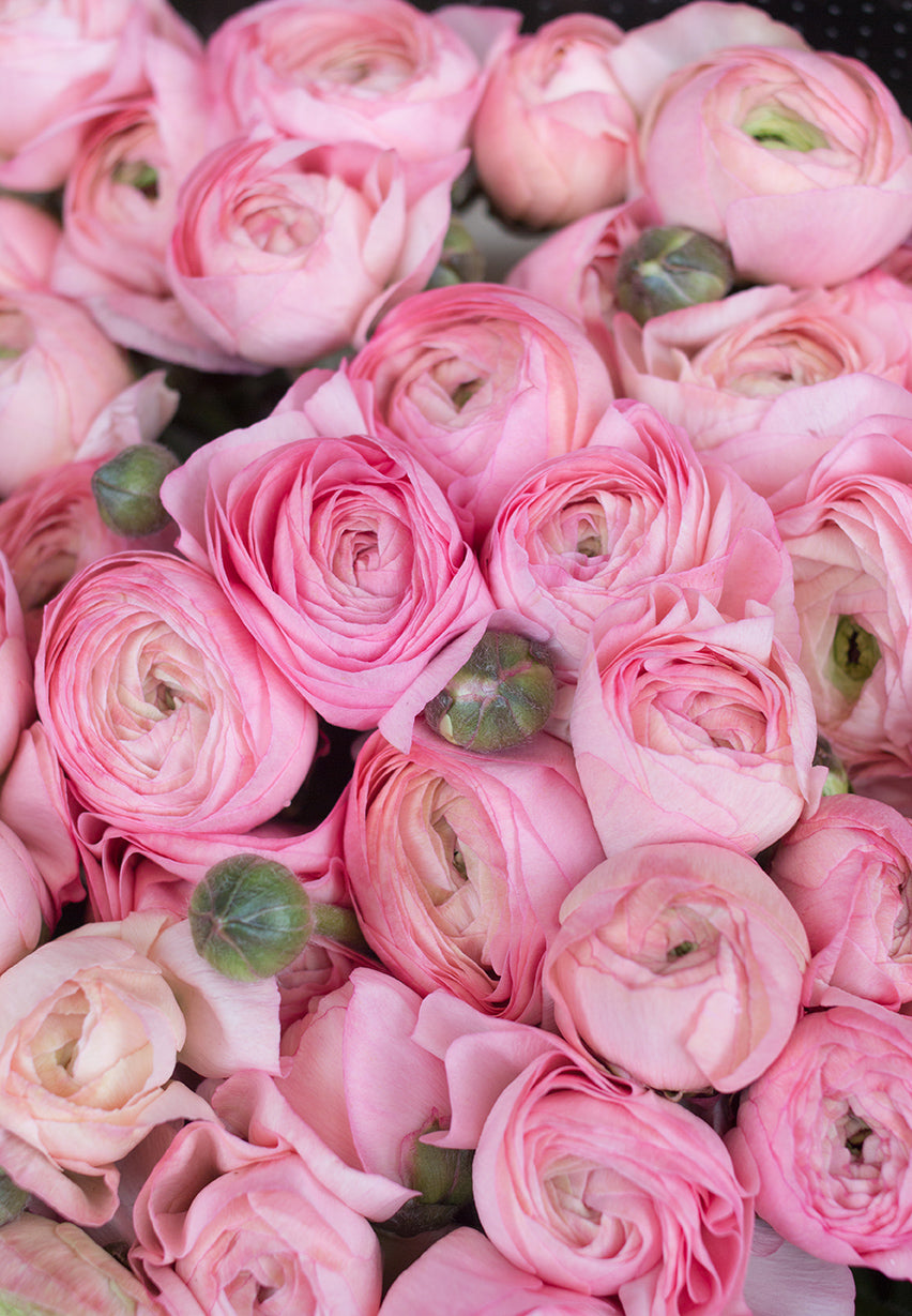 Pink Ranunculus at the Paris Market - Every Day Paris