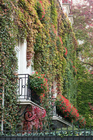 Fall Balcony in Paris - Every Day Paris