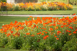 Spring Poppies in Luxembourg Gardens - Every Day Paris