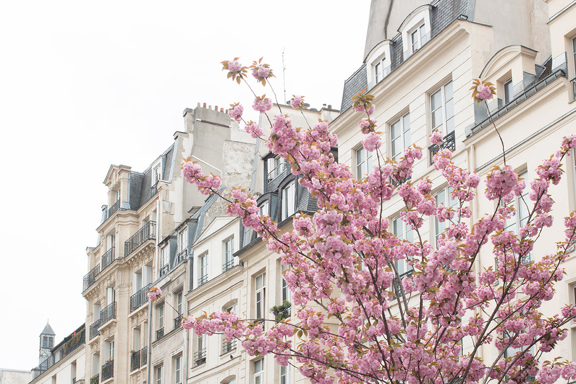 Cherry Blossoms in Paris France - Every Day Paris