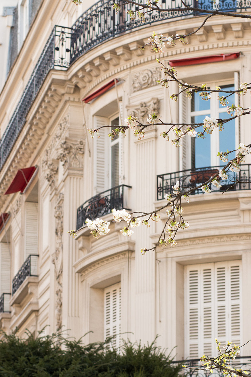 Paris Blossom Season - Every Day Paris