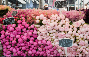 Paris Pink Peonies - Every Day Paris