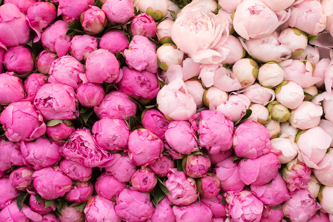 Peony Season in Paris - Every Day Paris