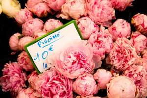 Fragrant Pink Peonies in Southern France - Every Day Paris