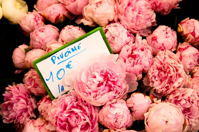 Fragrant Pink Peonies in Southern France