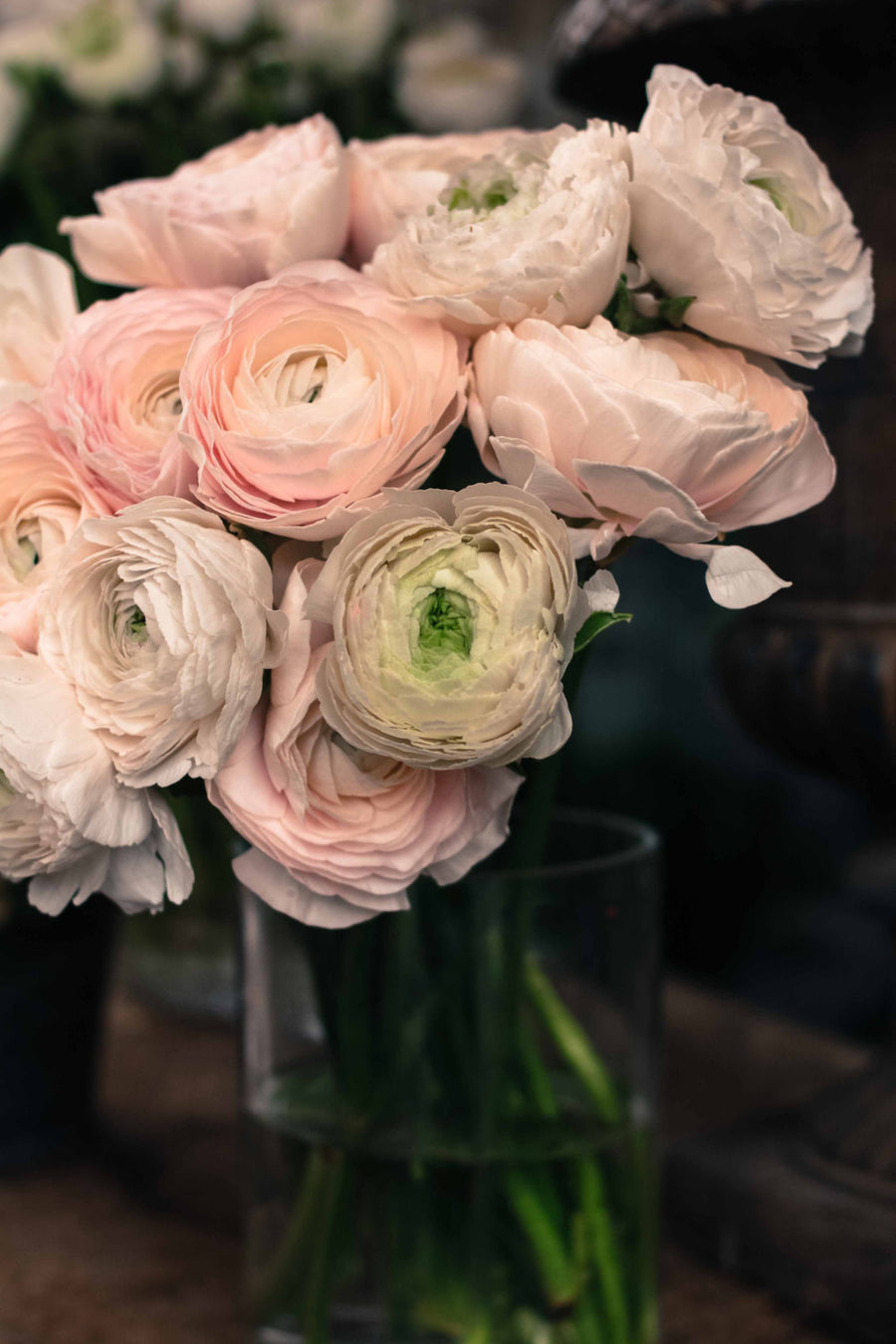 Pink Ranunculus for sale in Paris - Every Day Paris