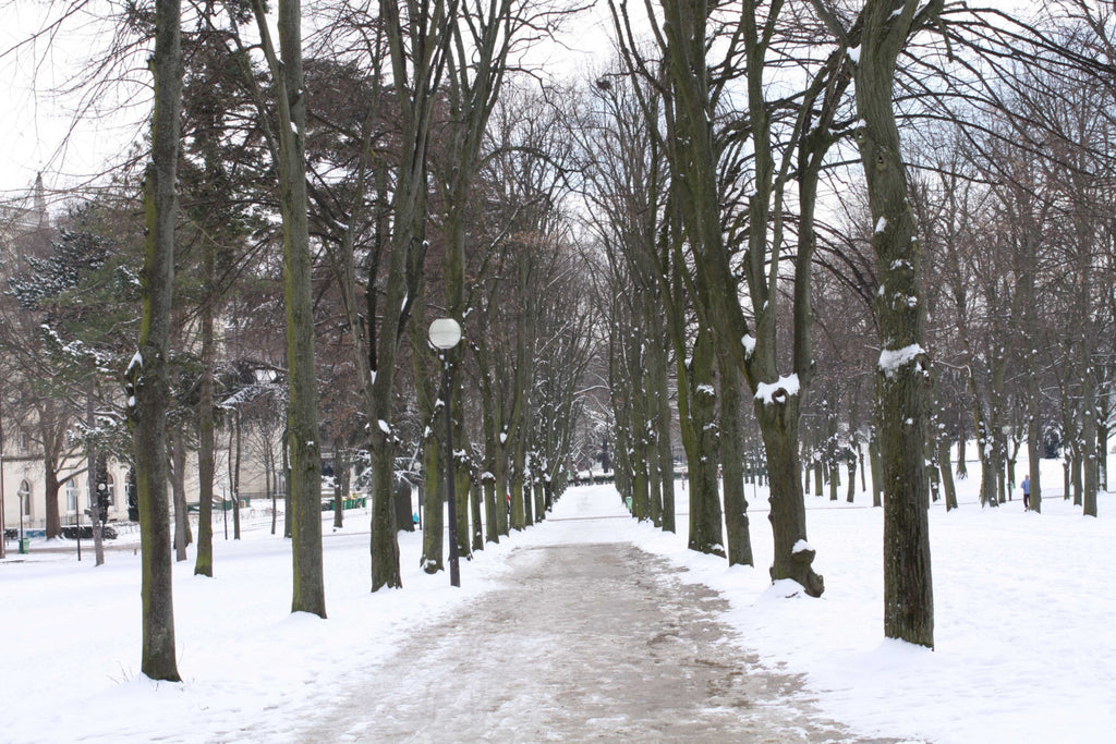 Snowy Path in Paris - Every Day Paris