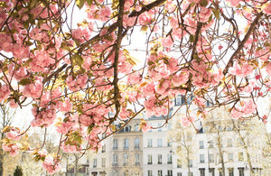 Spring by the Seine - Every Day Paris