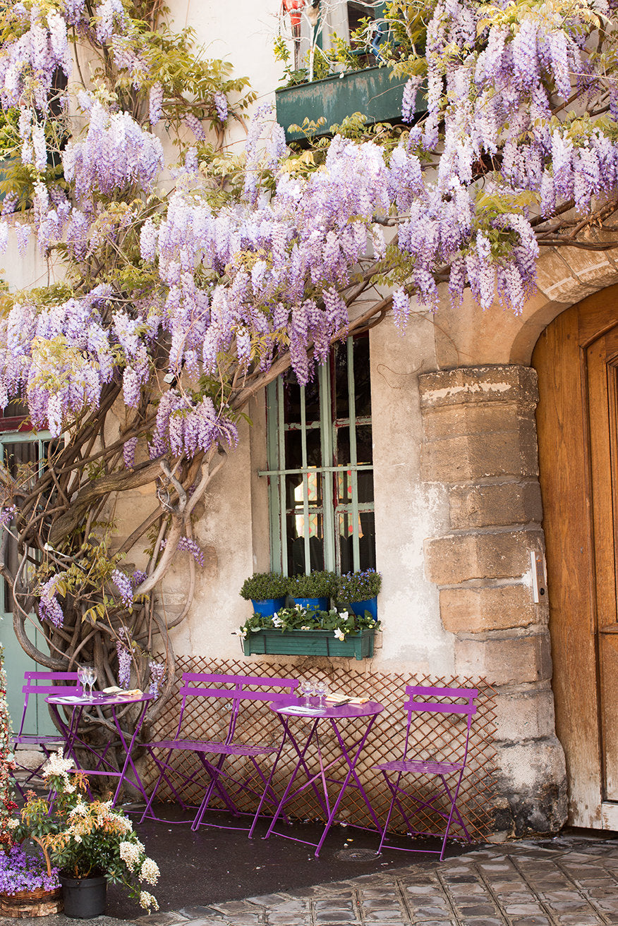 Purple Wisteria in Paris