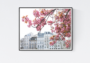 Seine Cherry Blossoms in Bloom - Every Day Paris