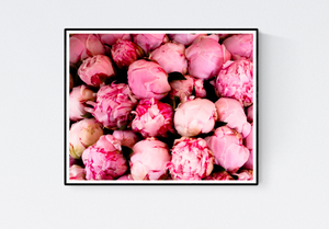 Pink Peonies in Southern France - Every Day Paris
