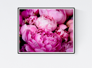 Fragrant Bright Pink Peonies - Every Day Paris