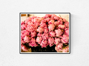 Summer Fragrant Pink Peonies in Southern France - Every Day Paris