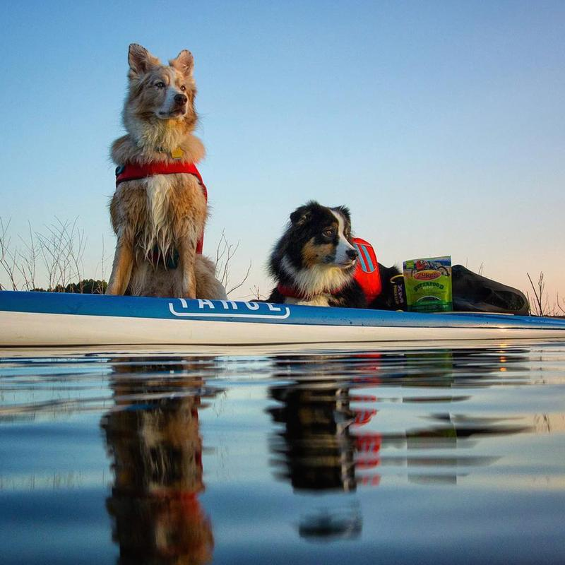 """How to SUP With Your Pup"" Offers Guide to Paddle Board Fun With Your Dog"