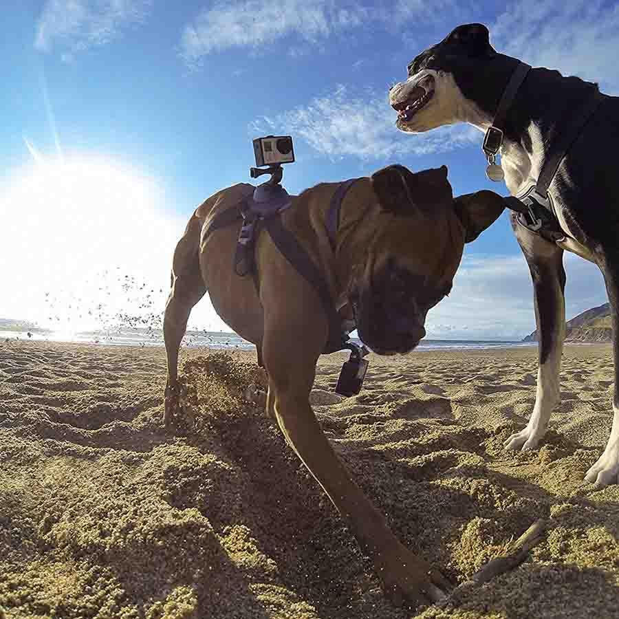 GoPro Fetch (Dog Harness) Mounts 4theoutdoors Canada SUP outdoors