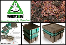 COMBO: WormsRus Worm Farm - Base and 2 Feeding trays with 250g Worms