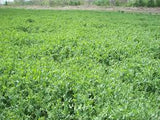 BioLogic's Winter Peas 10 lb