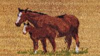 Entrance Mat Foal & Mare