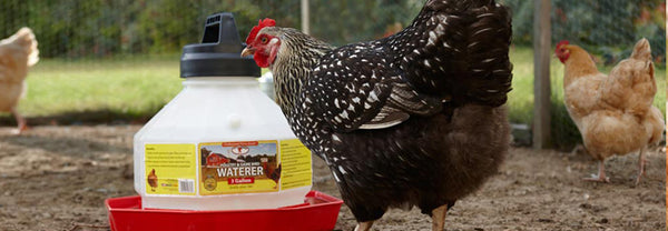 Heated Chicken Waterer-Holds 3 Gal