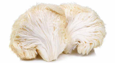 lions mane mushroom Acidmath Awakening Mind Chill Nootropic ingredient