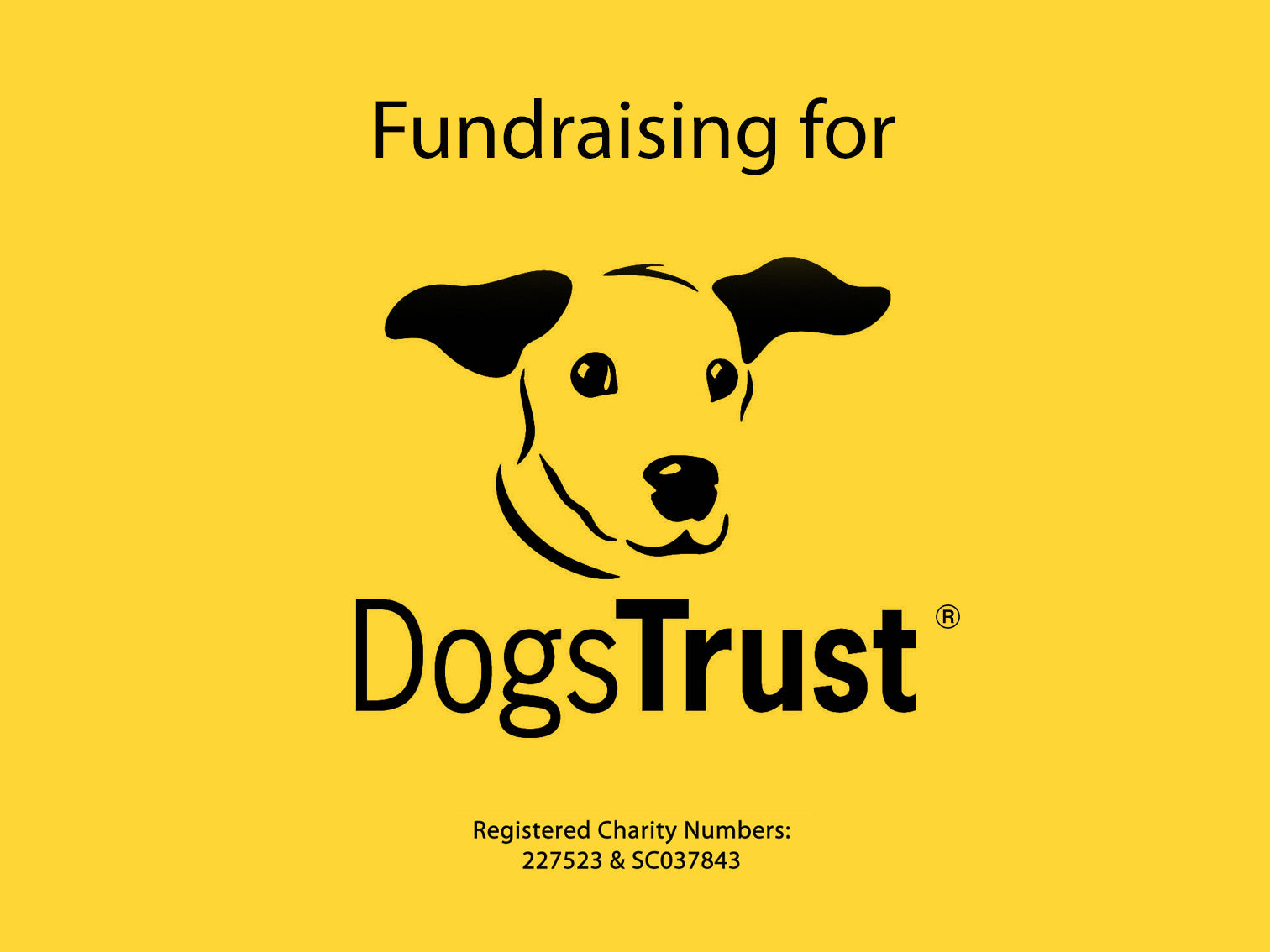 Dogs Trust Mind Chill NFT art collection 2021