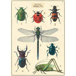 Vintage Poster: Insects (large)