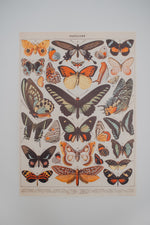 Vintage Poster: Butterflies