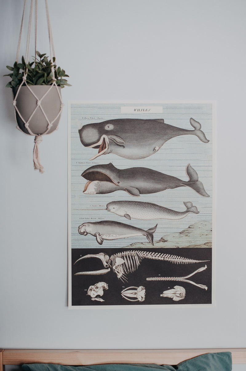 Vintage Poster: Whales