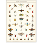Vintage Poster: Insects (small)
