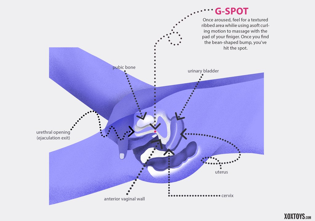 g-spot location diagram