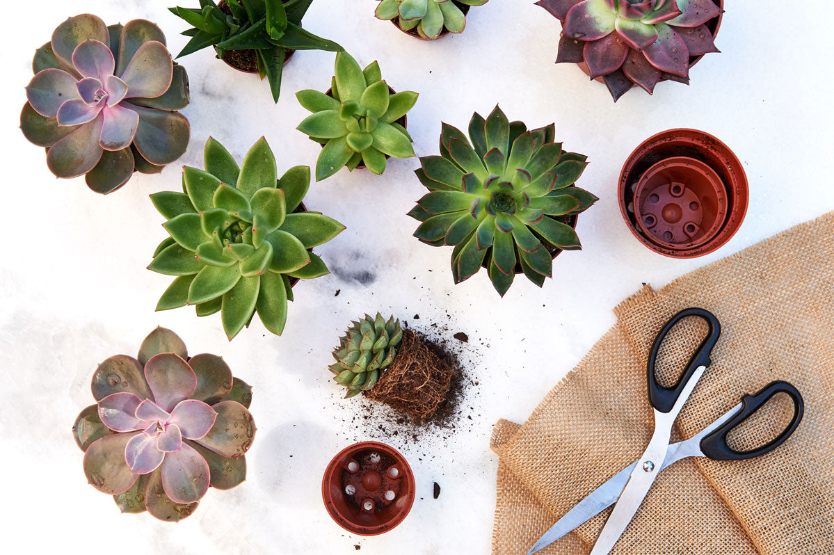 The Benefits of Succulents in your Home