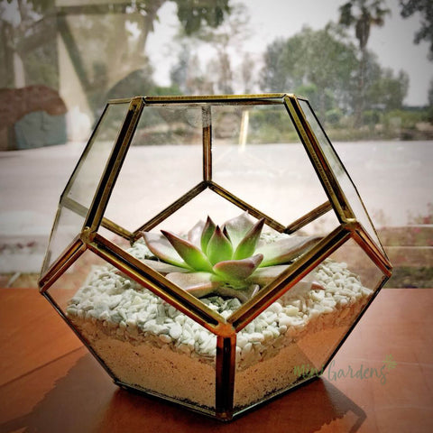 Art Terrariums MiniGardens.ae