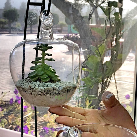 Custom Glass Terrariums MiniGardens.ae