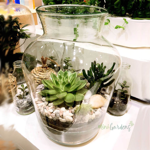 Glass Terrariums MiniGardens.ae