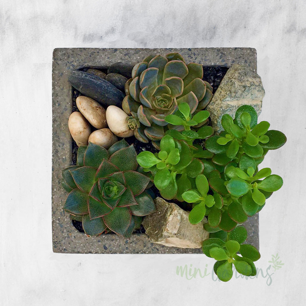 Buy and Send  beautiful Succulents Flower Gifts created by MiniGardens.ae Free Delivery in Dubai