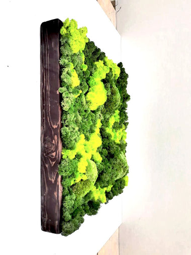 Zen Green Wall Send Online MiniGardens.ae Free Delivery in Dubai, UAE.