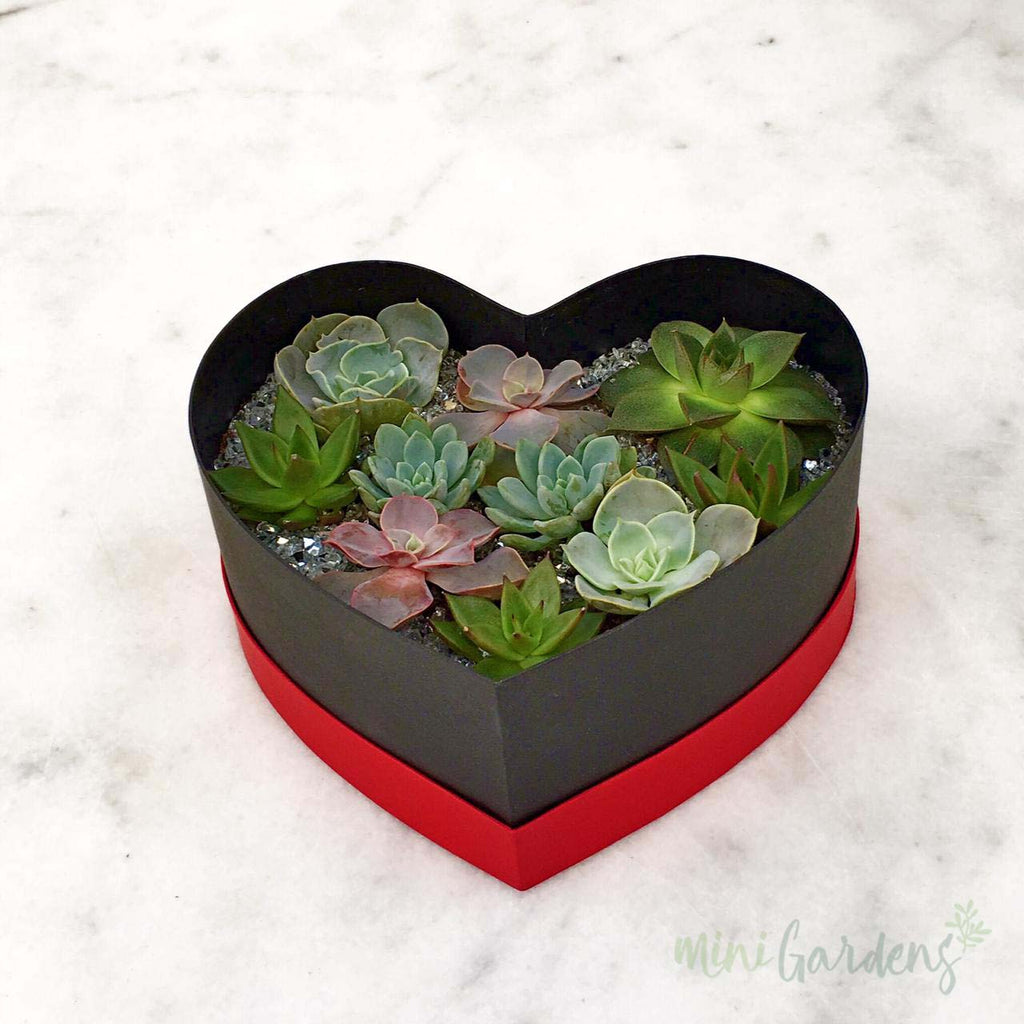 Heart Garden (Red) Online Store MiniGardens.ae Delivery Dubai
