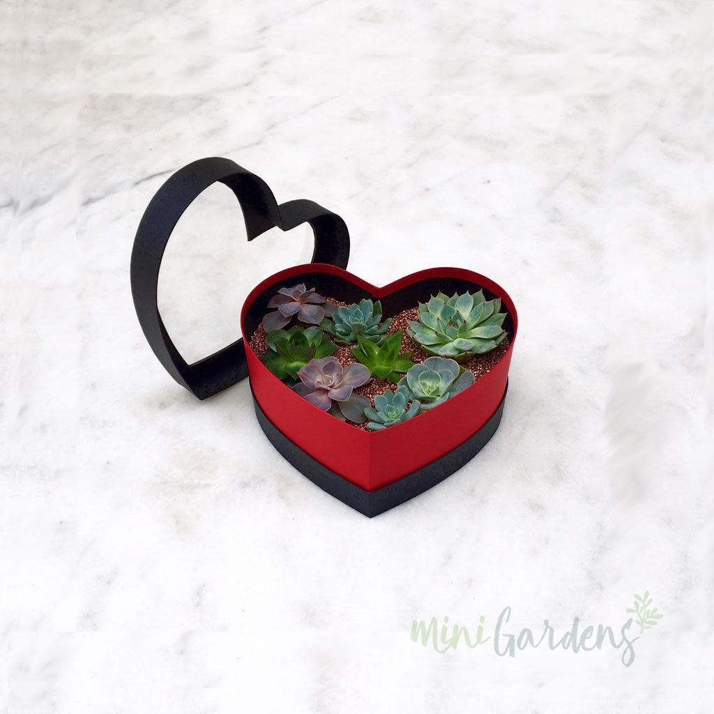 Heart Garden (red) Send Online MiniGardens.ae  Delivery Dubai, Sharjah, UAE