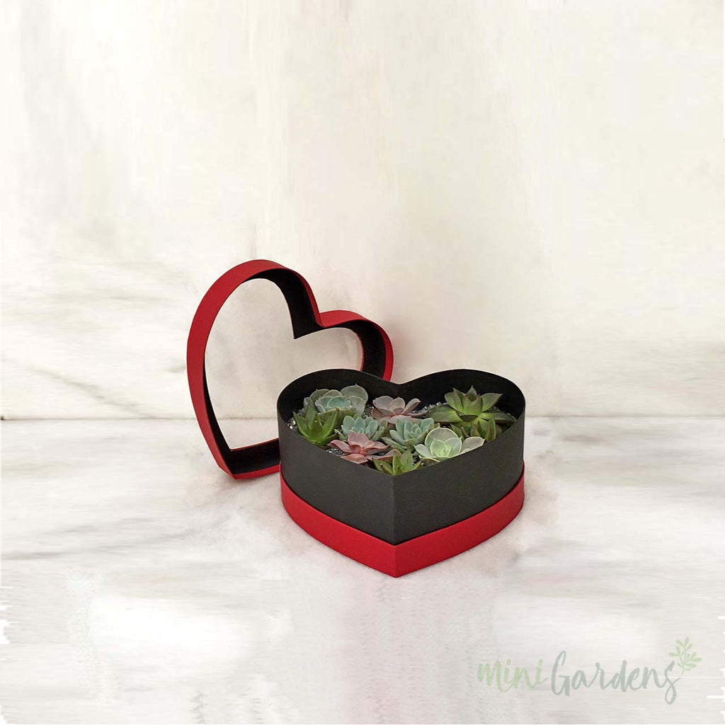 Heart Garden (Small) Send Beautiful Gifts Dubai, United Arab Emirates.