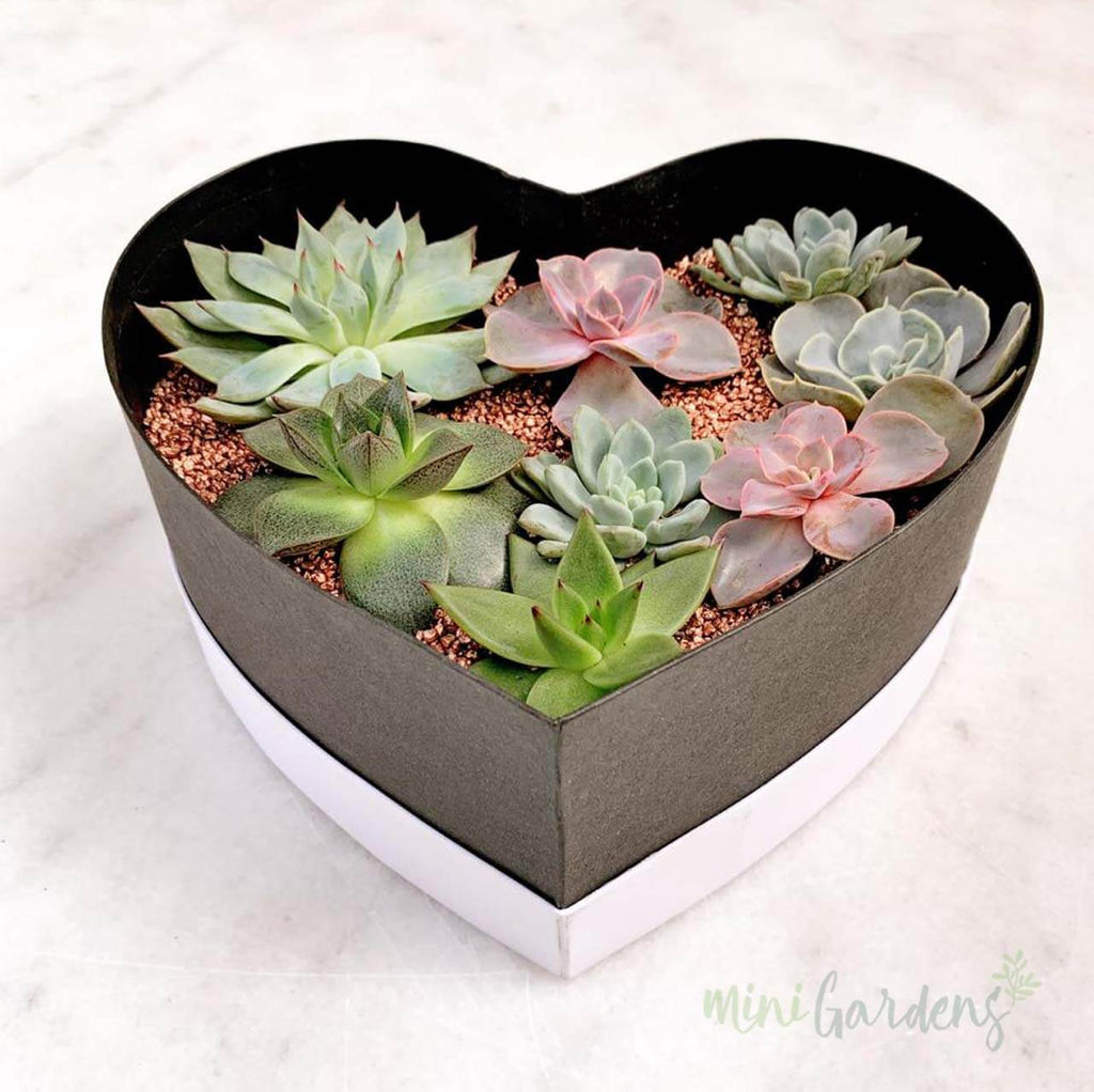 Heart Garden (White) Send Online MiniGardens.ae  Delivery Dubai, Sharjah, UAE